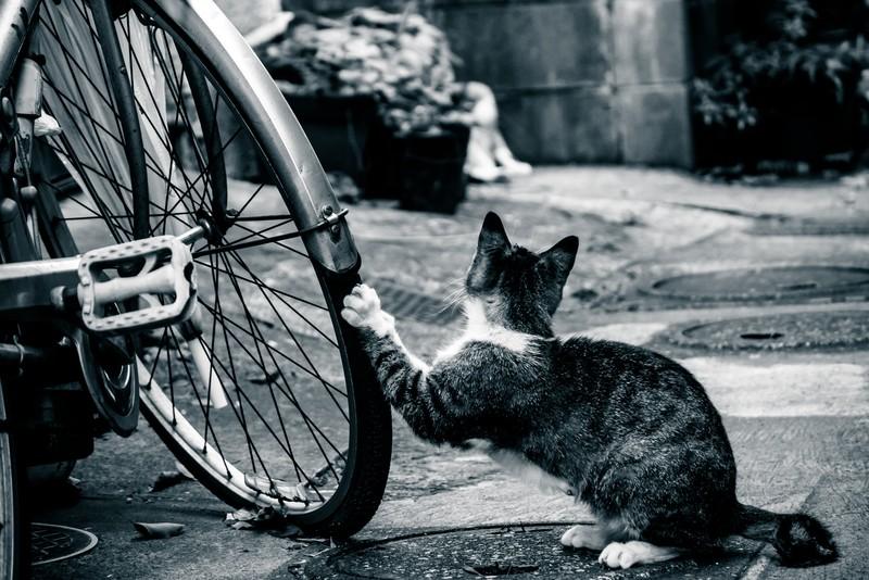 ロードバイクタイヤの交換時期【走行距離・状態】